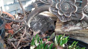 egels in tuin